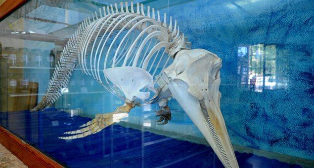 Μουσείο Φυσικής Ιστορίας Απειράνθου