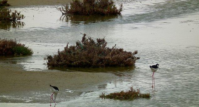 Ammitis Wetland