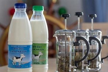 Γαλακτοκομικά Προϊόντα Νάξου: Αγνά και Γευστικά!
