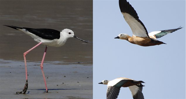 Παρακολούθηση πουλιών στη Νάξο και στην Ηρακλειά