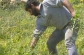 Η Δική μου Σχοινόυσα: Η δυνατότητα παράγωγης και καλλιέργειας της γης